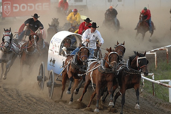Chuckwagon Horses Well Cared For Canadian Cowboy Country
