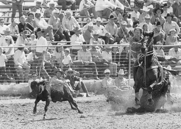 Inducted in the Livestock category is Fred, the legendary rope horse of six-time Canadian Tie-Down Roping Champion Larry Robinson. Photo courtesy Robinson family.