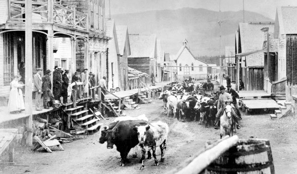 Cattle drive down Main Street of Barkerville, B.C. ca. 1875. Interestingly, Barkerville's main street doesn't look all that much different today—a testament to the careful restoration of this gold rush town. Image A-03787 courtesy of Royal BC Museum, BC Archives.