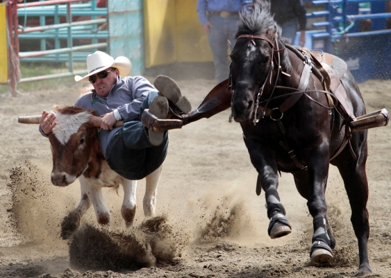 Chance Butterfield of Ponoka, Alberta, competes in steer wrestling at the Luxton Pro Rodeo last year.   Photograph By LYLE STAFFORD, Times Colonist - See more at: http://www.timescolonist.com/b-c-green-party-resolution-calls-for-end-to-rodeos-1.1100148#sthash.eFdvao8D.dpuf