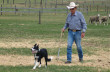 content-1508-trainingstockdogs
