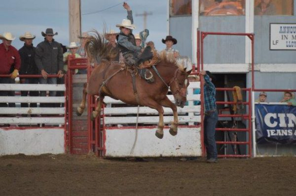 Dawson Hay on C5 Rodeo stock; Cowtown Pro Rodeo. Photo courtesy Cowtown Pro Rodeo/Mike Copeman