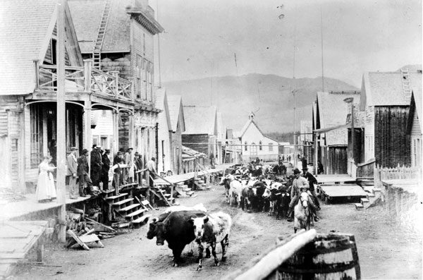A cattle drive up the main street of Barkerville during the Gold Rush. Photo courtesy Royal BC Museum.